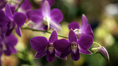 Magenta Orchids Print by Lynn Palmer