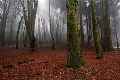 Green Forest Photograph - Magic Light by Jorge Maia