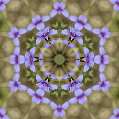 Magical Bluet Wildflower Kaleidoscope Print by Kathy Clark