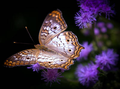 Butterfly In Flight Photograph - Magical Butterfly by Karen Wiles