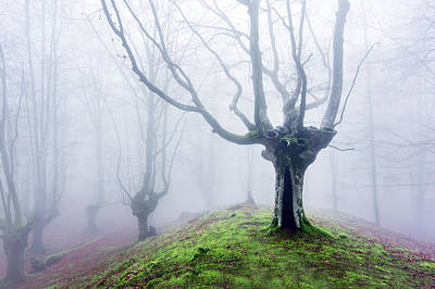 Fantasy Bark Photograph - Magical Forest With Fog by Mikel Martinez de Osaba