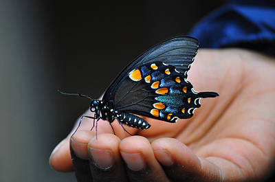 Butterfly Photograph - Magical Moment by Stacy Siverio