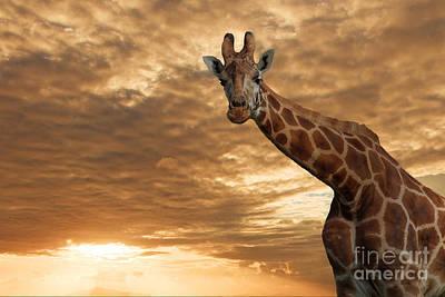 Pete Reynolds Photograph - Magical Savanna by Pete Reynolds