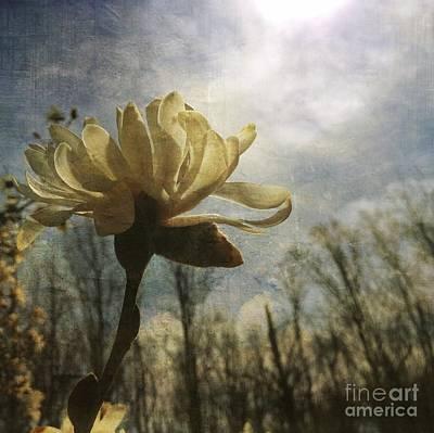 Magnolia Blossom Print by Chris Scroggins
