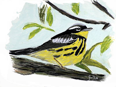 Magnolia Warbler Print by Lawrence Golla