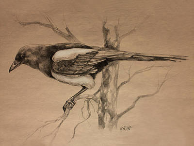 Magpies Drawing - Magpie Sketch by Derrick Higgins