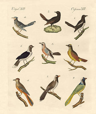 Magpies Drawing - Magpies And Jays by Splendid Art Prints