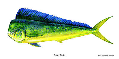Rod Painting - Mahi Mahi by Charles Harden