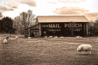 Mail Pouch Tobacco Barn And Sheep Print by Randall Branham