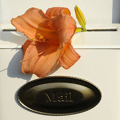 Special Occasion Photograph - Mailbox Lily by Luke Moore