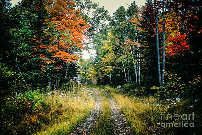 Maine Back Road Print by George DeLisle