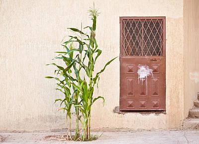 Maize Plant Print by Tom Gowanlock