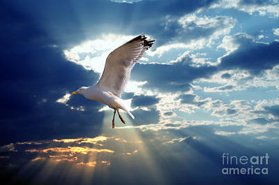 Feather Photograph - Majestic Bird Against Sunset Sky by Michal Bednarek