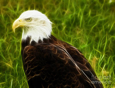 Majestic Eagle Print by Joann Copeland-Paul