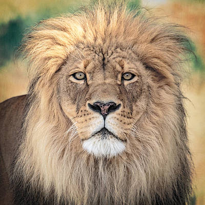 Regal Photograph - Majestic King by Everet Regal