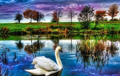 Majestic Swan Print by Catherine Davies
