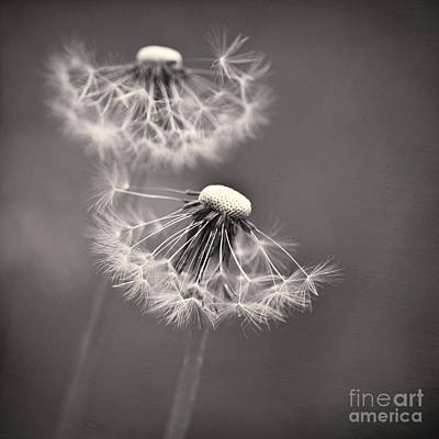 Wishes Photograph - make a wish I by Priska Wettstein