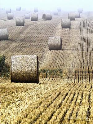 Make Hay While The Sun Shines  Print by Heiko Koehrer-Wagner