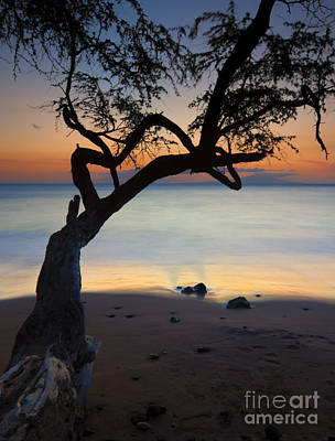 Trees Photograph - Makena Breeze by Mike  Dawson