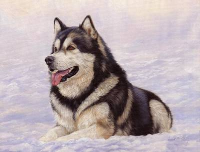 Huskies Painting - Malamute by David Stribbling