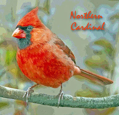 Print featuring the photograph Male Cardinal On Tree Branch by A Gurmankin