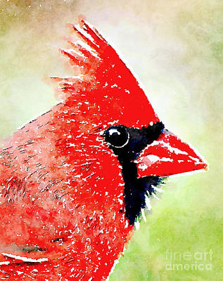 Red Photograph - Male Cardinal Profile - Watercolor by Kerri Farley