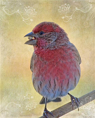 Male Housefinch With Corner Decorations Print by Debbie Portwood
