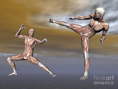 Rectus Abdominis Digital Art - Male Musculature In Fighting Stance by Elena Duvernay