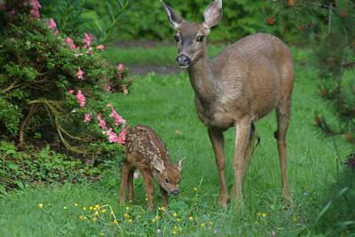 Mama Deer And Baby Bambi Print by Kym Backland