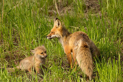 Fox Photograph - Mama Fox And Kit by Natural Focal Point Photography