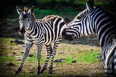 Nairobi Photograph - Mama Loves Her New Baby Zebra by Gary Keesler
