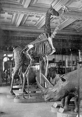 Nineteenth Century Photograph - Mammal Pavilion by Natural History Museum, London