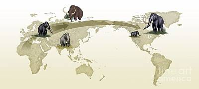 Mammoth Evolutionary Migration Print by Spl