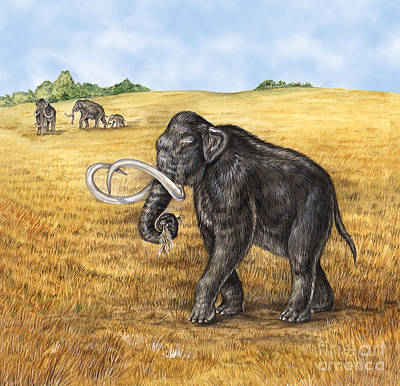 Mammoth Print by Laurie OKeefe