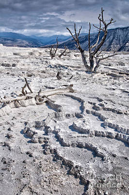 Mammoth Photograph - Mammoth Terraces Vertical by Delphimages Photo Creations