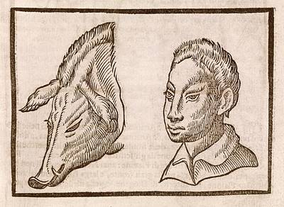 Man And Pig's Head Print by Middle Temple Library