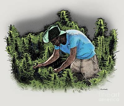 Ganja Mixed Media - Man With A Green Hat by Joseph Juvenal