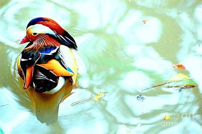Mandarin Duck Resting II Print by C Lythgo