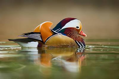 Mandarin Print by Yuri Peress