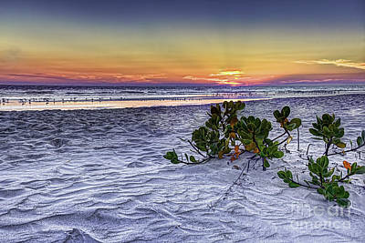 Mangrove On The Beach Print by Marvin Spates