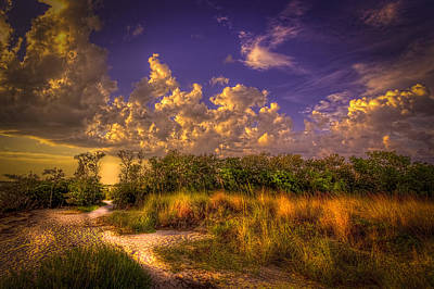 Mangrove Path Print by Marvin Spates
