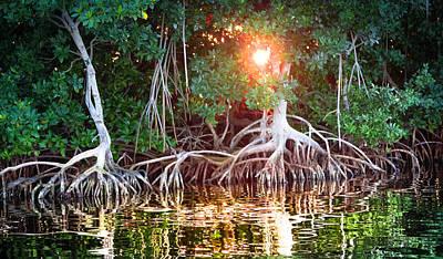 Mangrove Sunset Print by Karen Wiles