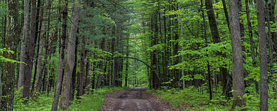 Manistee National Forest Michigan Original by Steve Gadomski