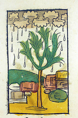 Manna From Heaven Print by National Library Of Medicine