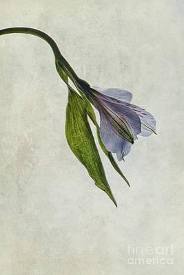 Inca Photograph - Mantis Lily by John Edwards