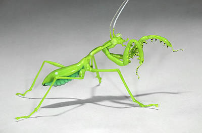 Glass Blowing Photograph - Mantis by Tomasz Litwin