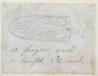 Body Paint Photograph - Maori Tattoo Design by British Library