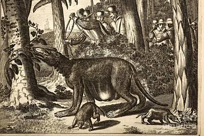Mapinguari, Mylodon Genus, 1673 Print by Paul D. Stewart