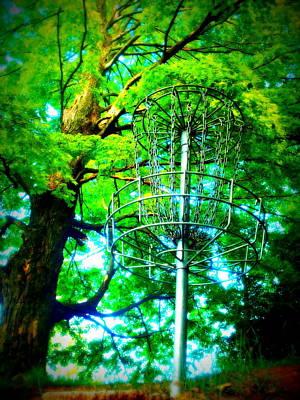 Photograph - Maple 18 by Alicia Forton