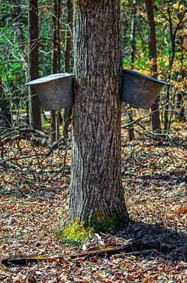 Maple Bucket Tap Print by Brian Stevens